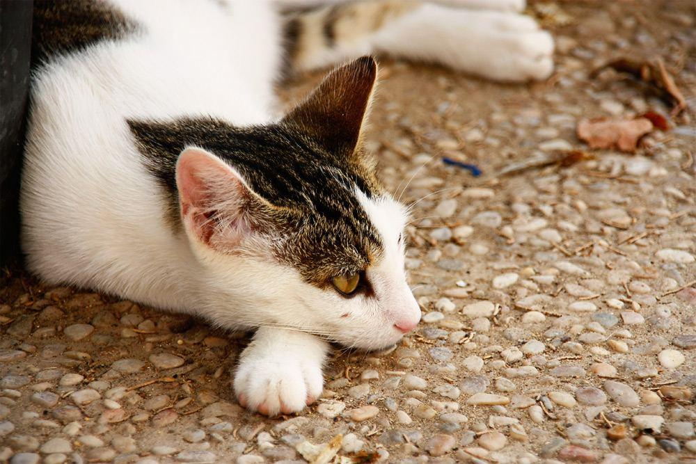 Katze-Port-Soller