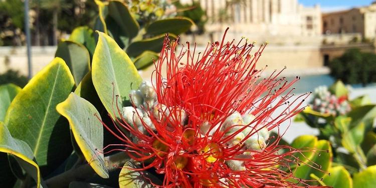 Palma-Kathedrale-Blume-750x375
