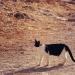Ein Katze in Port de Sóller