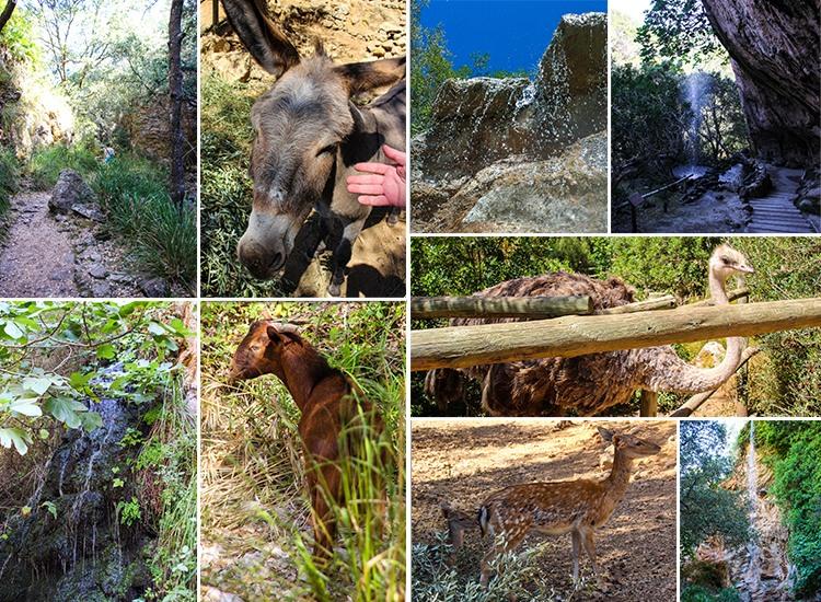 Mallorca-La-Reserva-Puig-de-Galatzo-Esel-Tiere-Natur