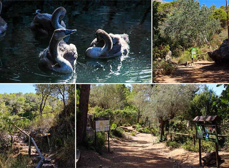 Mallorca-La-Reserva-Puig-de-Galatzo-Wandern-Wege