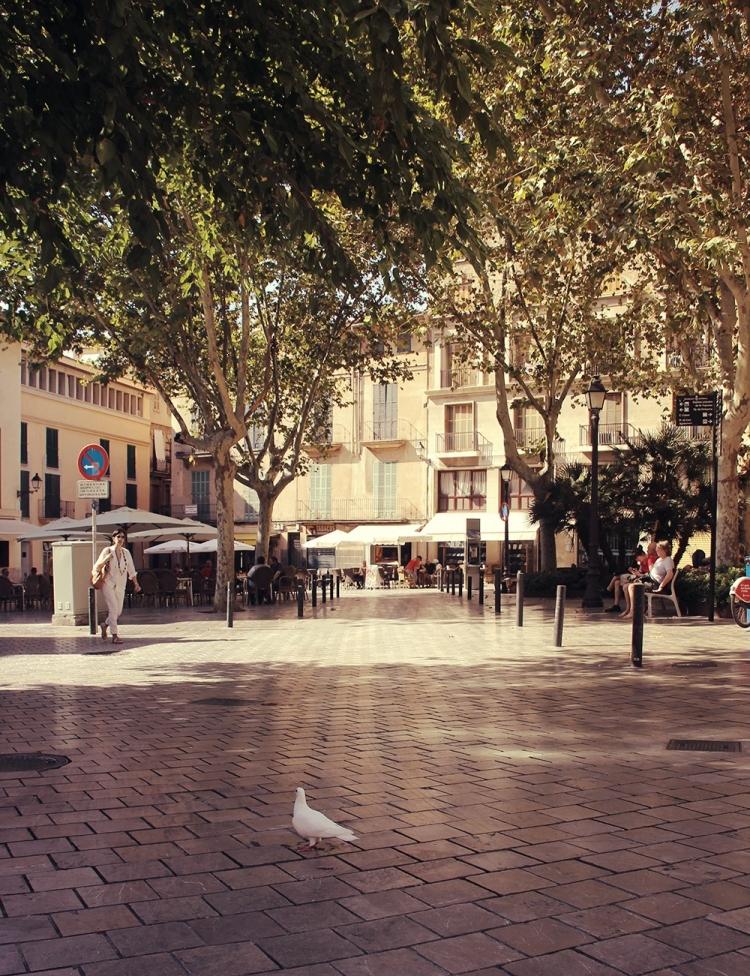 Mallorca-Palma-Taube-Menschen-Pause