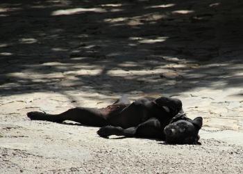 Mallorca-Els-Calderers-Hund-Pause