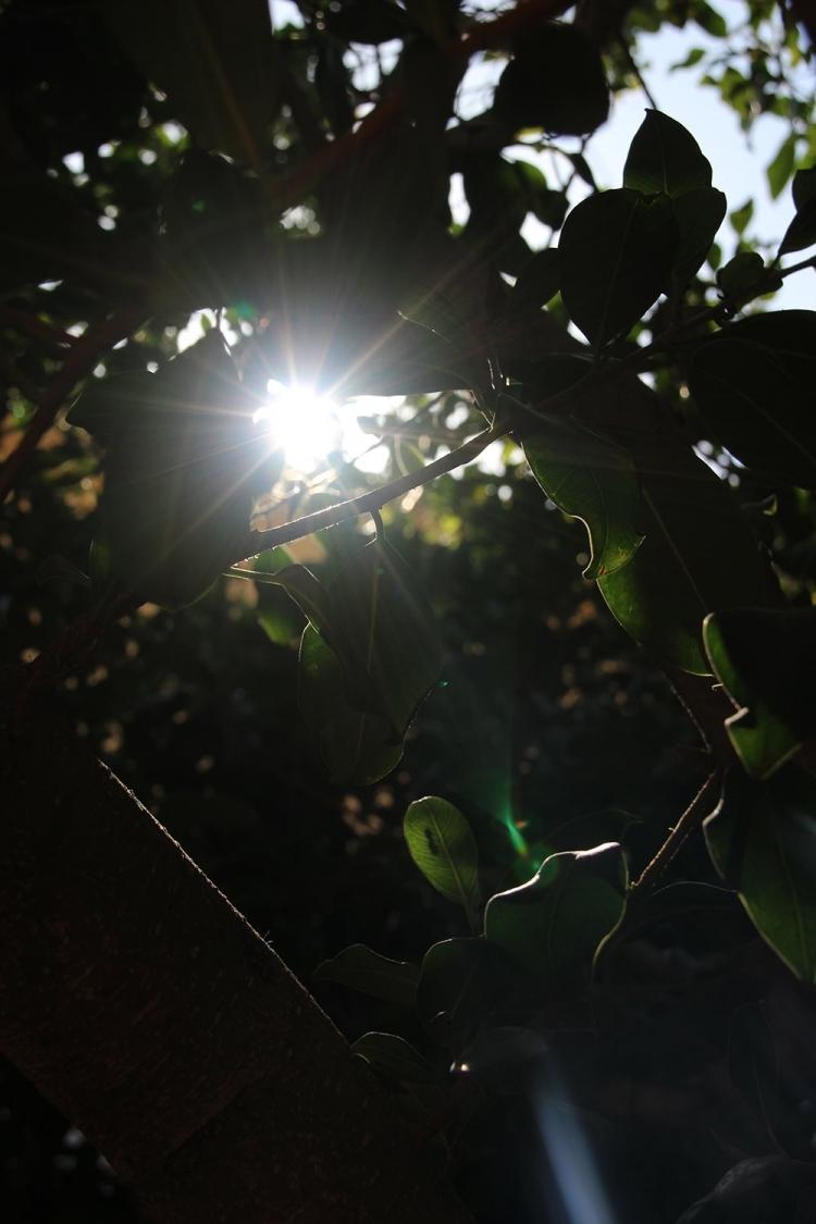 Mallorca-Morgen-Sonne-Blaetter