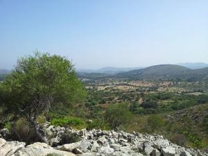 Mallorca-Natur-Berge-Baum-300x225