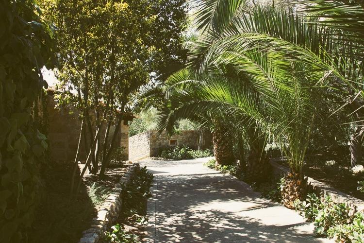 Mallorca-Els-Calderers-Weg-Baeume