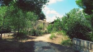 Mallorca-Albufera-Parc-Alcudia-Baeume-300x169