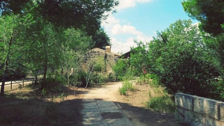 Mallorca-Albufera-Parc-Alcudia-Baeume