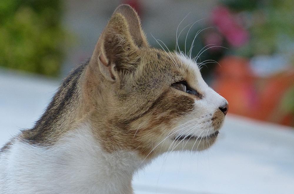 Mallorca-Katze-Deia