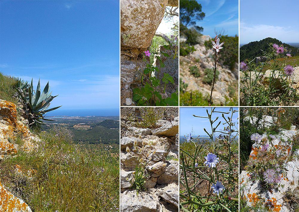 Mallorca-Castell-de-Santueri-Pflanzen