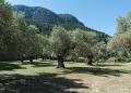 Mallorca-Monestir-de-Miramar-Baeume-120x86