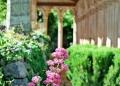 Mallorca-Monestir-de-Miramar-Garten-Blumen-120x86