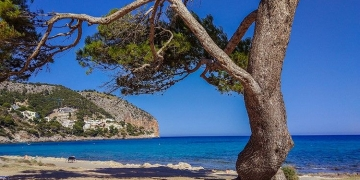 Mallorca-Canyamel-Strand-Berge-Baum-360x180