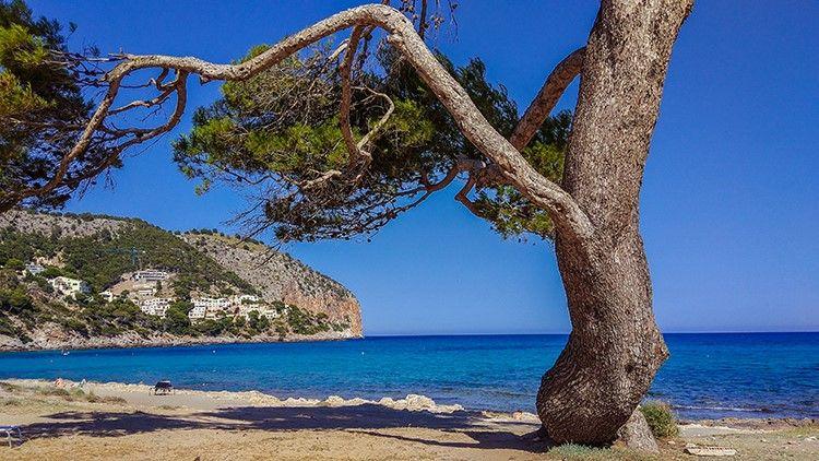 Mallorca-Canyamel-Strand-Berge-Baum