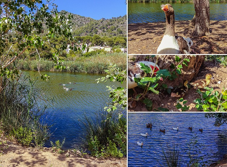 Mallorca-Enten-Canyamel-Torrent-Fluss