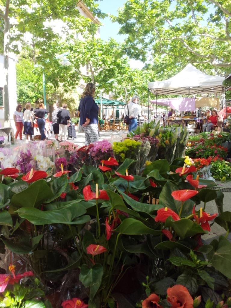 Bunter-Wochenmarkt