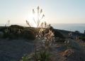 Cap-Formentor-Sonnenaufgang-Meer-Pflanze-Sonnenschein-120x86