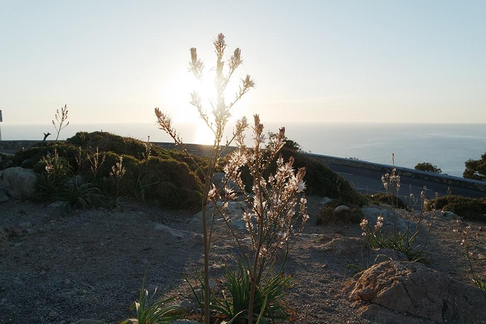 Cap-Formentor-Sonnenaufgang-Meer-Pflanze-Sonnenschein