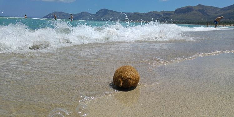 Seebaelle-Mallorca-Strand-750x375