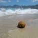 Seebälle finden sich häufig an Mallorcas Stränden