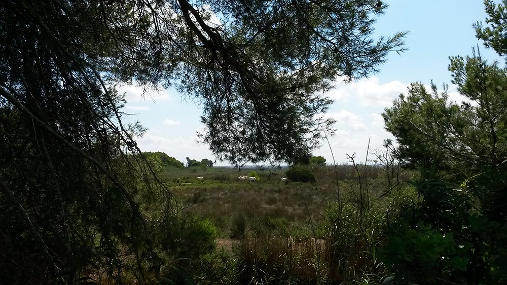 Mallorca-Albufera-Park-Alcudia-Natur-Pferde