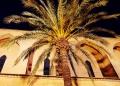 Mallorca-Alcudia-Nacht-Kirche-Palme-3-120x86