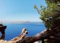 Mallorca-La-Victoria-Wandern-Geocachen-Meer-Aussicht-Baumstamm-120x86