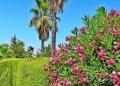 Mallorca-Biniagual-Palmen-Blumen-120x86