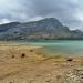 Mallorca-Stausee-Cuber-Stiere-Wasser