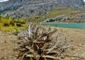 Mallorca-Stausee-Cuber-Wasser-Steine-Alter-Baum-120x86