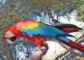Rancho-Grande-Papagei-120x86