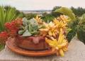 Mallorca-Finca-Petra-Pflanzen-Kaktus-120x86