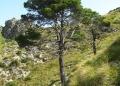 Mallorca-Betlem-Wanderung-Baum-120x86