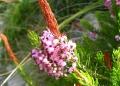 Mallorca-Betlem-Wanderung-Blume-120x86