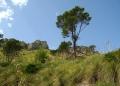 Mallorca-Betlem-Wanderung-Felsen-Berge-Baum-120x86