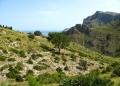 Mallorca-Betlem-Wanderung-Felsen-Berge-Baum-2-120x86
