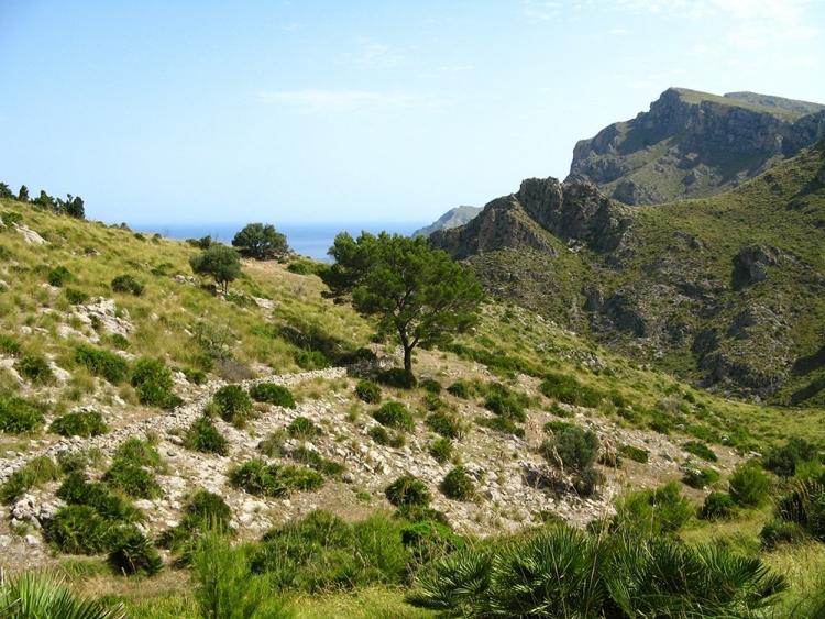 Mallorca-Betlem-Wanderung-Felsen-Berge-Baum-2