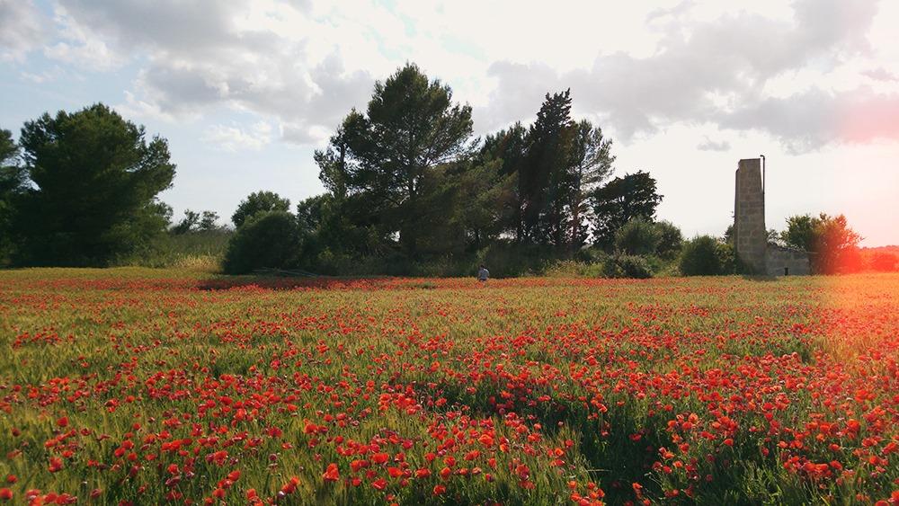 Mallorca-Mohnfeld-Natur-Menschen-Ferne-Frau-Allein