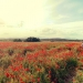 Mallorca-Mohnfeld-Natur-Menschen-Ferne-Maedchen