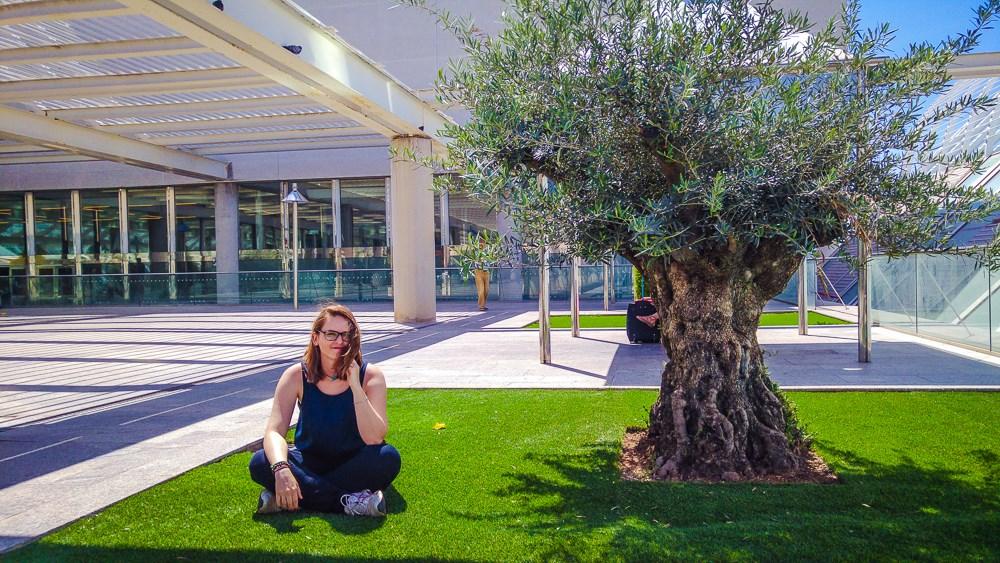 Mallorca-Palma-Flughafen-PMI-Raucherterrasse-Baum