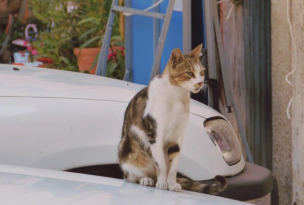 Mallorca-Deia-Katze-Auto