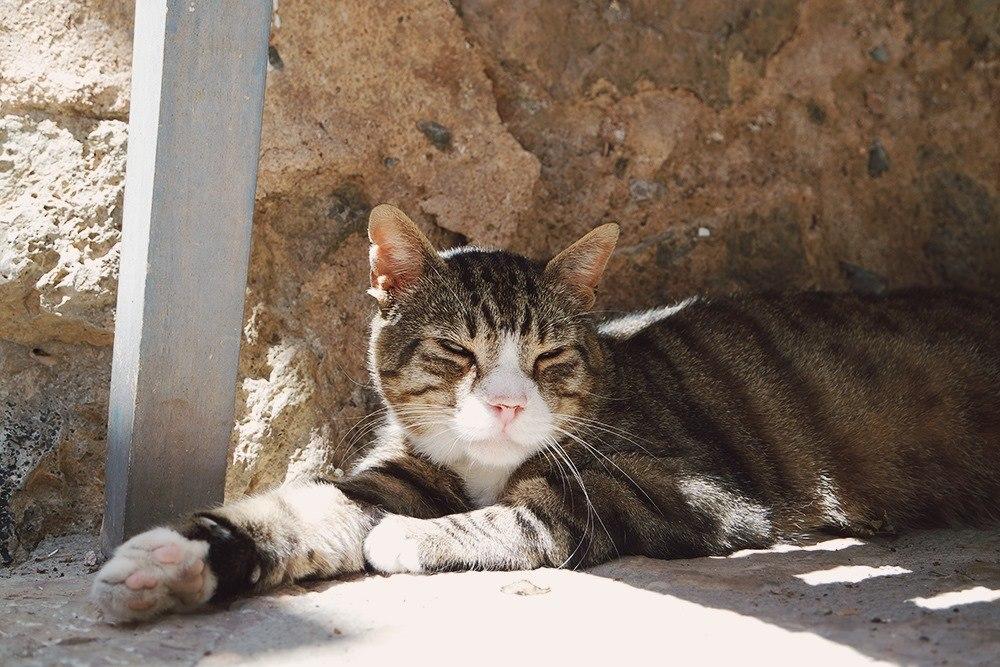 Mallorca-Deia-Katze