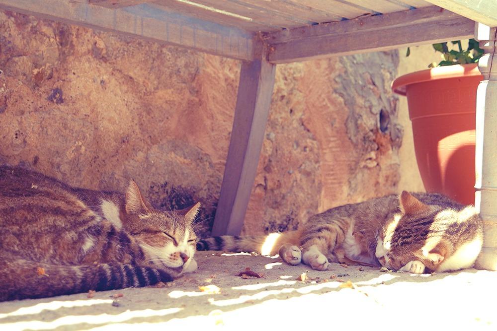 Mallorca-Deia-Katzen-Siesta-Schatten
