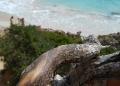 Mallorca-Calo-des-Moro-Strand-Meer-Ast-120x86
