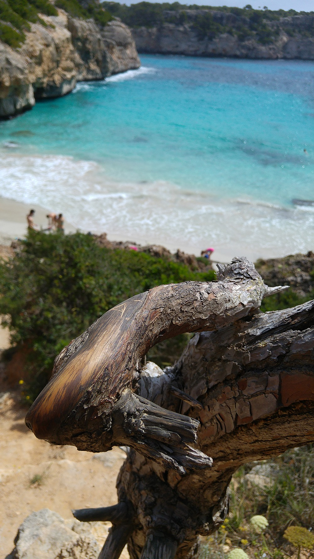 Mallorca-Calo-des-Moro-Strand-Meer-Ast