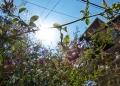 Mallorca-Deia-Pflanzen-Sonnenschein-120x86