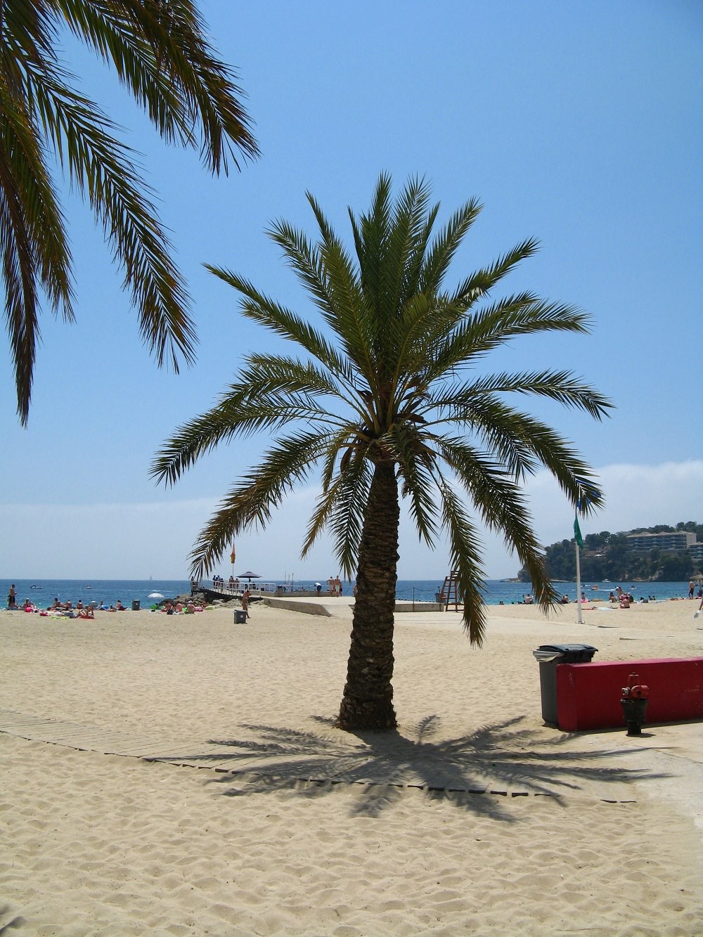 Mallorca-Strand-Magaluf-Palmen