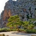 Mallorca-Sa-Calobra-Torrent-de-Pareis-Berge-Felsen-Baeume