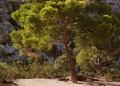 Mallorca-Sa-Calobra-Torrent-de-Pareis-Berge-Felsen-Baum-120x86