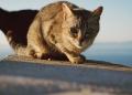 Mallorca-Cap-Formentor-Leuchtturm-Getigerte-Katze-120x86